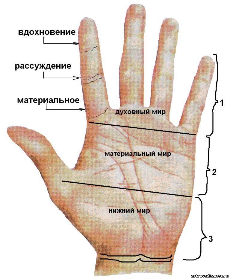 Схемы деления руки на зоны.
